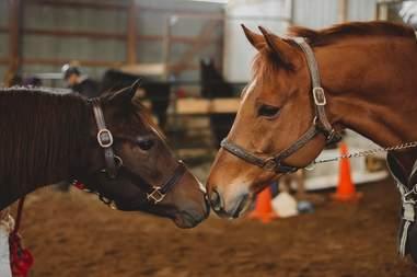 rescue horses meeting ontario