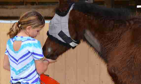 pony rescue abuse florida