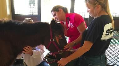 rescue pony florida