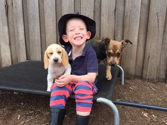 Little boy with two rescued puppies