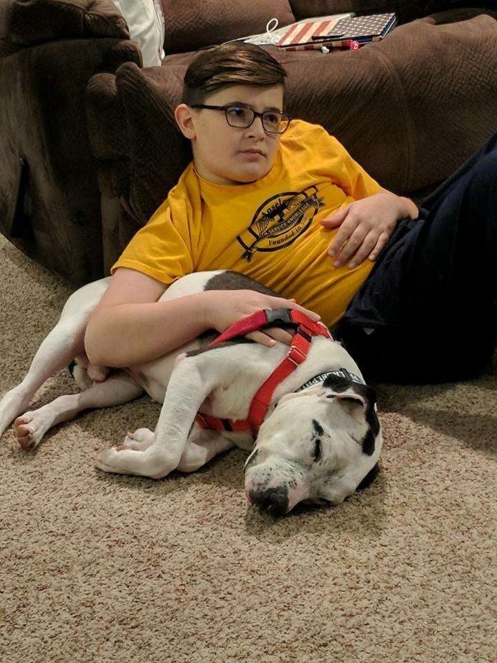 foster dog pit bull rescue