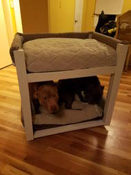 dog brothers get bunk beds