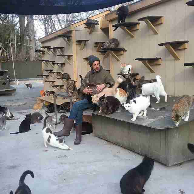 new york cat sanctuary