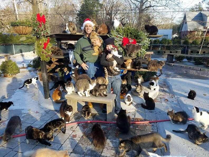 new york cat sanctuary