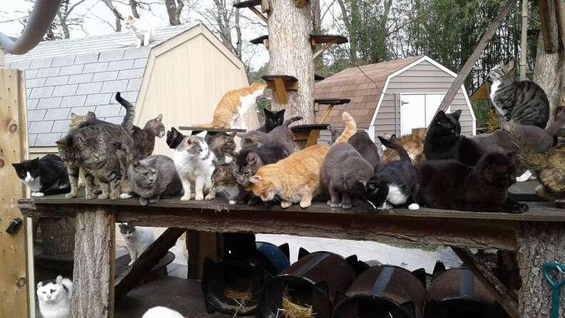 long island new york cat sanctuary