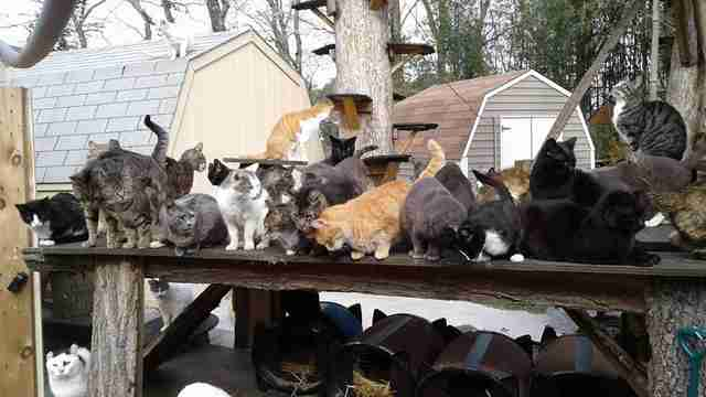 long island new york cat sanctuary