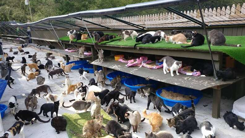 cat sanctuary long island new york