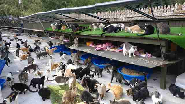 cat sanctuary long island new york