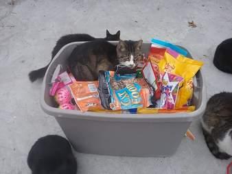 new york long island cat sanctuary