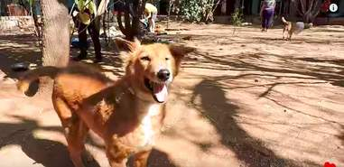 sick street dog