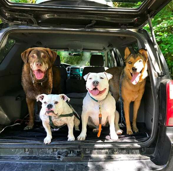rescue dogs hiking oregon