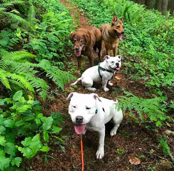 bulldog hiking