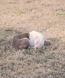 Abandoned dog sleeping in field