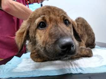 puppies abandoned at car storage place