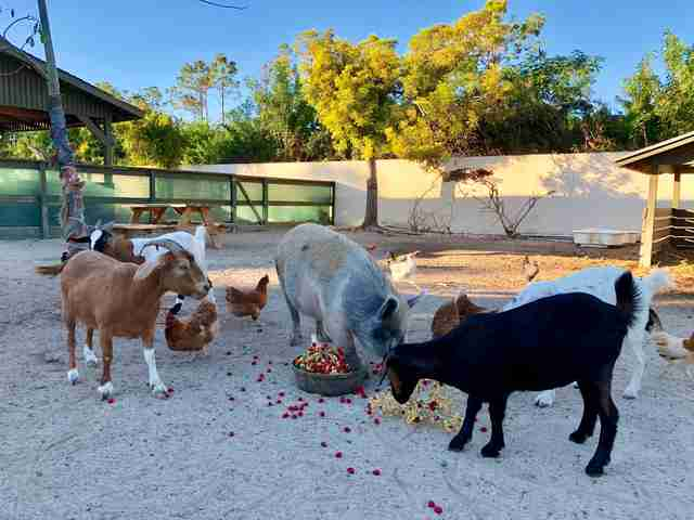 animal sanctuary bahamas
