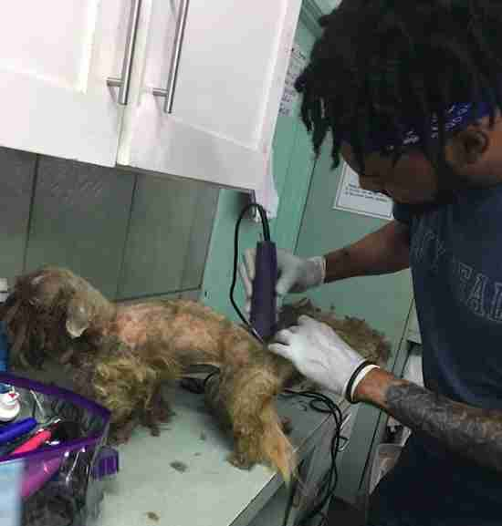 matted dog bahamas rescue