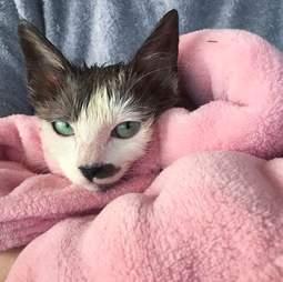 sick kitten healed
