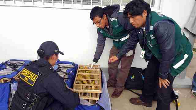 Officials found wild birds inside wooden cages