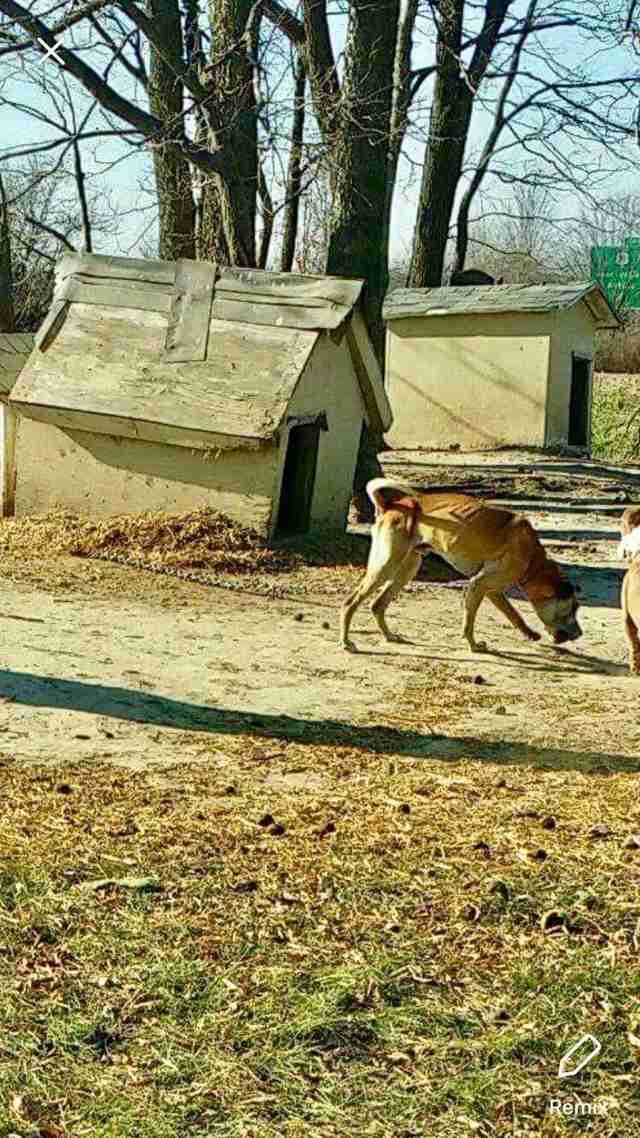 dog chained up for 14 years