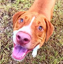 rescue dog texas