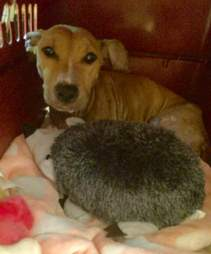 rescue bait dog texas