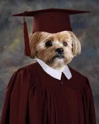 Yogi the dog's graduation picture