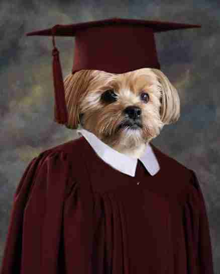 Yogi the dog's graduation picture