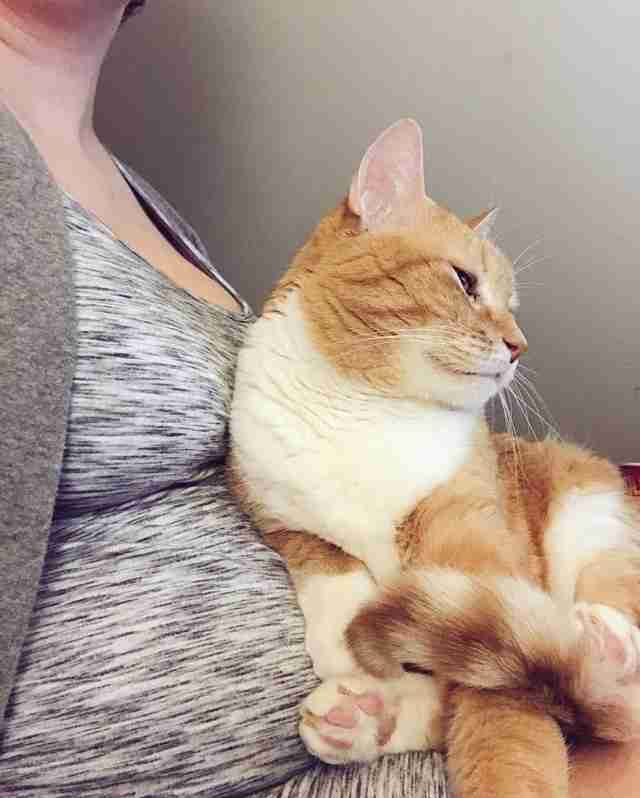 Cat cuddling against woman's pregnant belly
