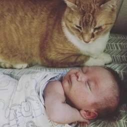 Cat sitting next to newborn baby