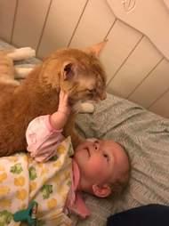 Baby touching orange cat
