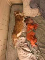 Cat cuddling with newborn baby