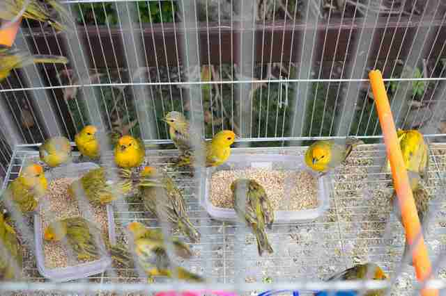 Rescued birds in cage