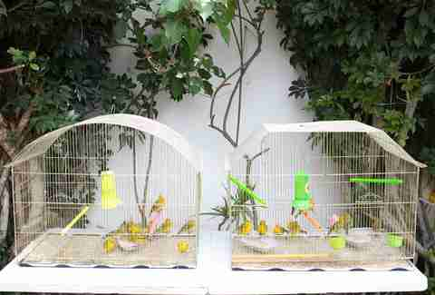Rescued birds in cages