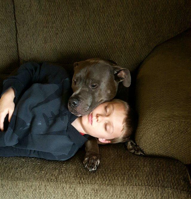 Roscoe The Hero Pup
