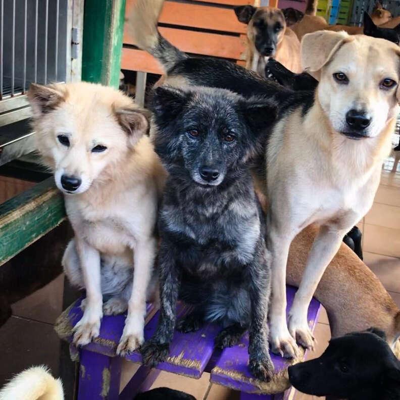 dog sanctuary taiwan