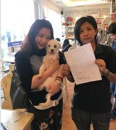taiwan dog sanctuary shelter rescue adoption