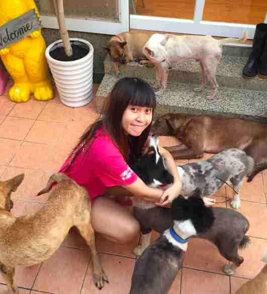 taiwan animal dog sanctuary