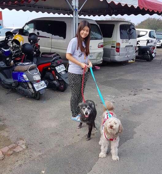 taiwan dog sanctuary