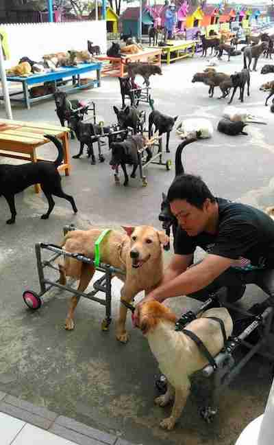 dog sanctuary taiwan