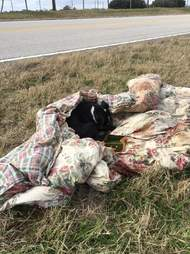 Abandoned puppy wrapped in blanket