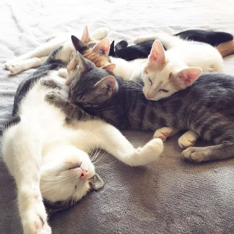 rescue cat kitten california