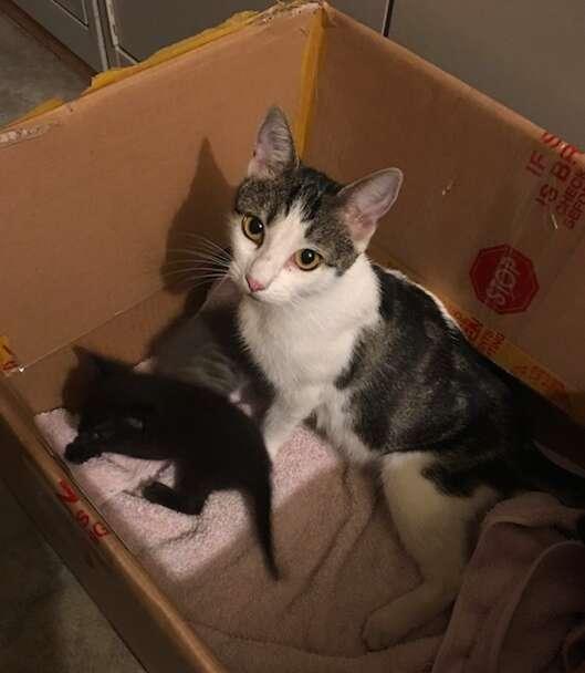rescue cat kittens tala