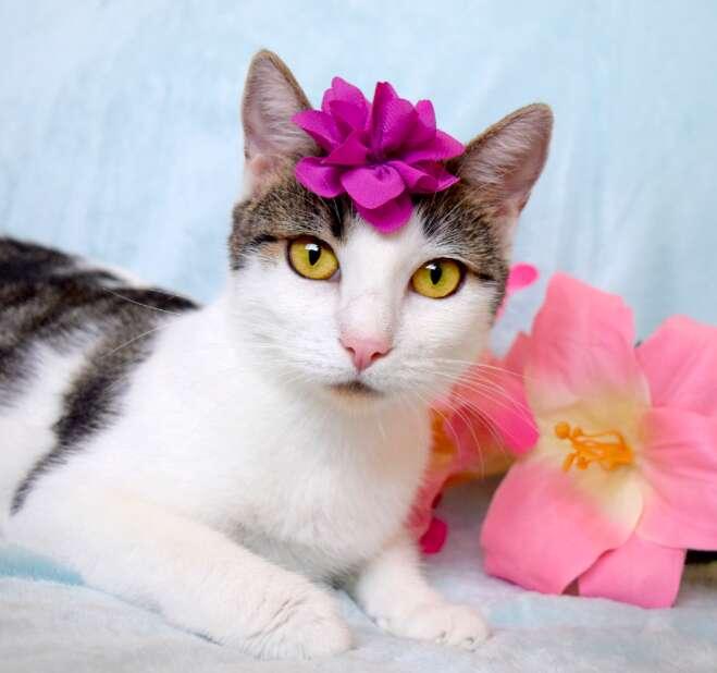 rescue cat kittens california