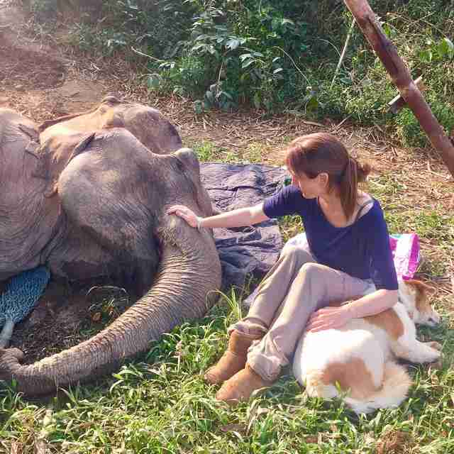 Dog and sanctuary founder comforting dying elephant