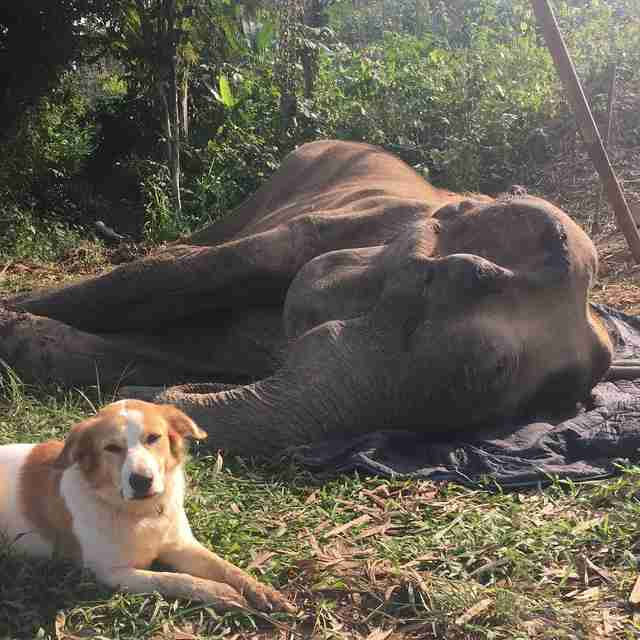 Dog comforting elephant friend