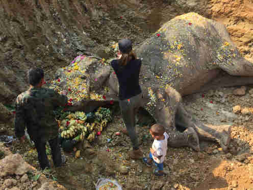 Rescued elephant getting buried with flowers