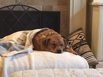 charlie dog burnt acid chicago