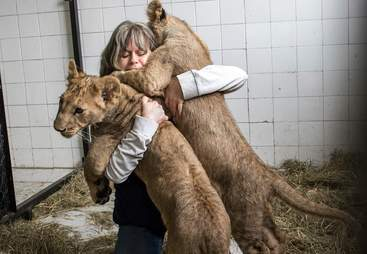 Woman says goodbye to lion cubs she raised