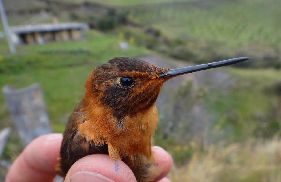 The Secrets of Hummingbird Agility Revealed
