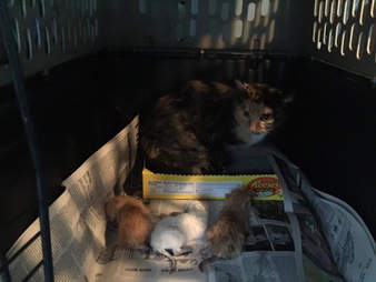 kitten cat dumped box west virginia